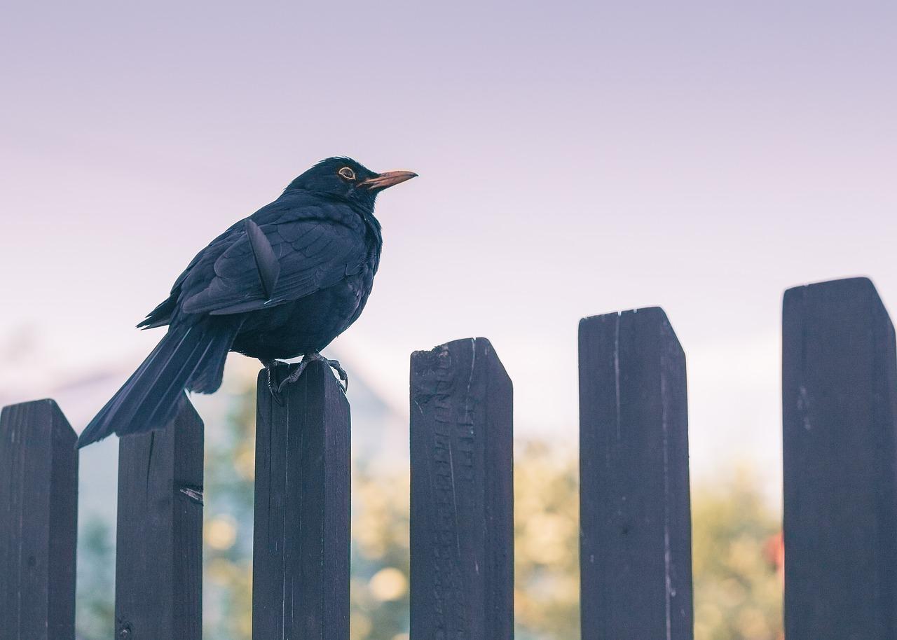 Betafence – nowoczesne panele ogrodowe dla prywatnych posesji, firm i magazynów