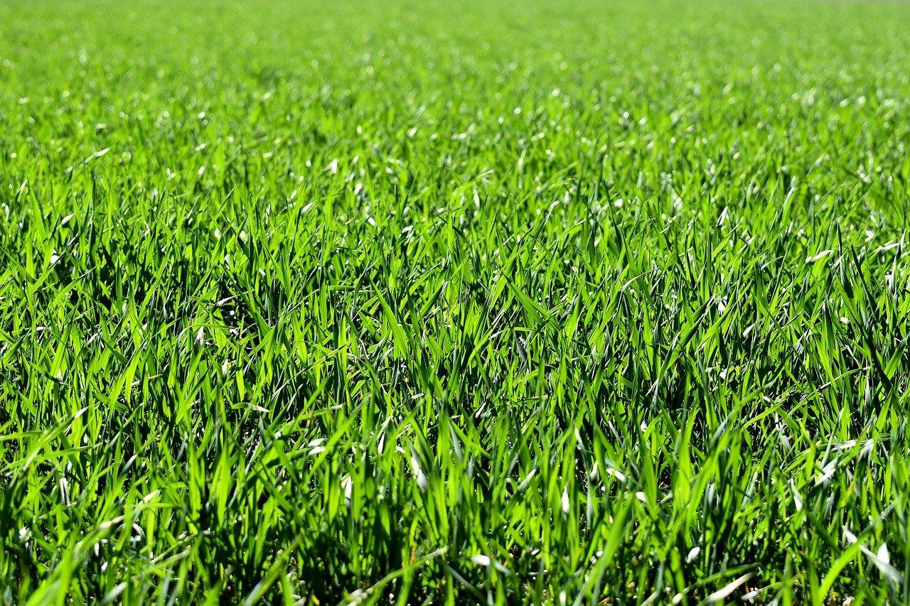 Jaką pompę wybrać do podlewania trawnika?