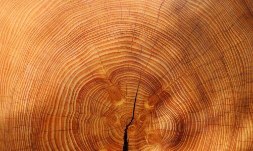 Popularne rodzaje frezów – żłobienie w drewnie bez tajemnic
